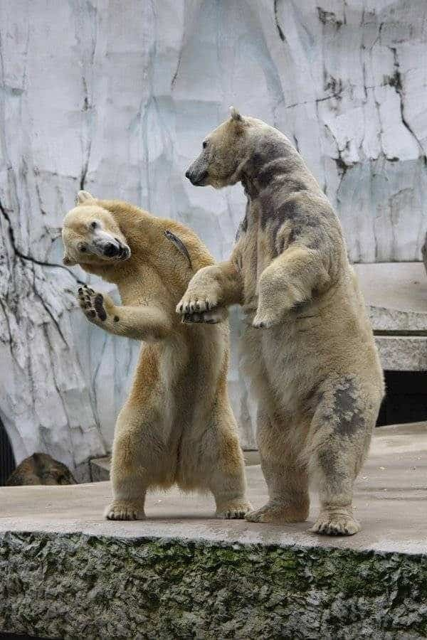 40 All Time Funny Pictures Of Dancing Animals