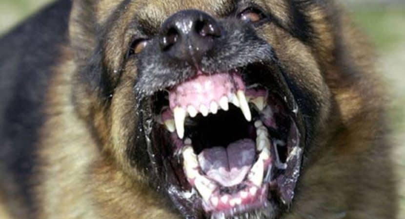 Most Aggressive Dog Breeds In The World