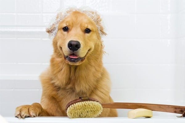 Can I Take A Cat A Shower With Dog Soap