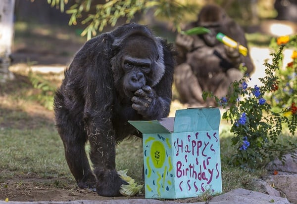 pictures of zookeepers celebrating birthdays of zoo animals 10