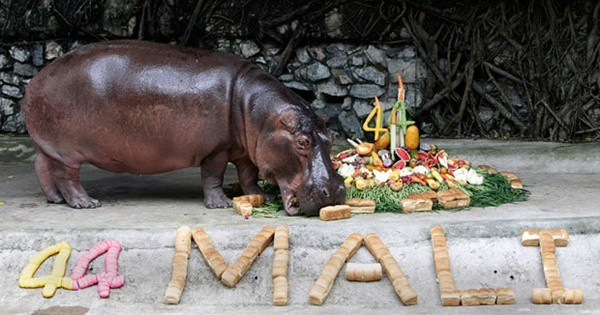 pictures of zookeepers celebrating birthdays of zoo animals 14