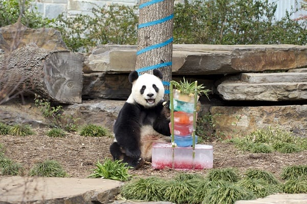 pictures of zookeepers celebrating birthdays of zoo animals 19
