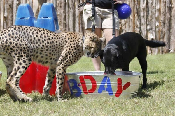 pictures of zookeepers celebrating birthdays of zoo animals 27