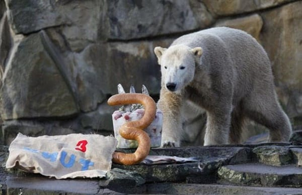 pictures of zookeepers celebrating birthdays of zoo animals 30