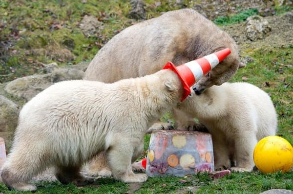 pictures of zookeepers celebrating birthdays of zoo animals 32