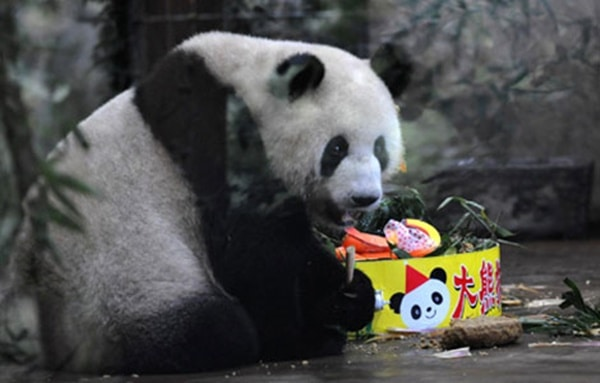 pictures of zookeepers celebrating birthdays of zoo animals 34