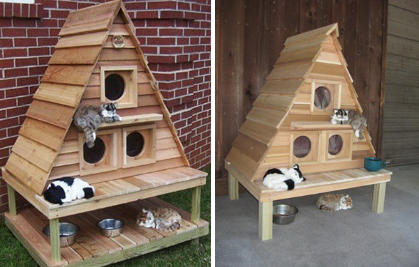 Great Indoor Cat House