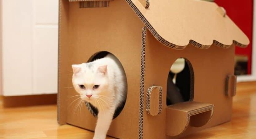 10 Great Ideas of Indoor Cat House