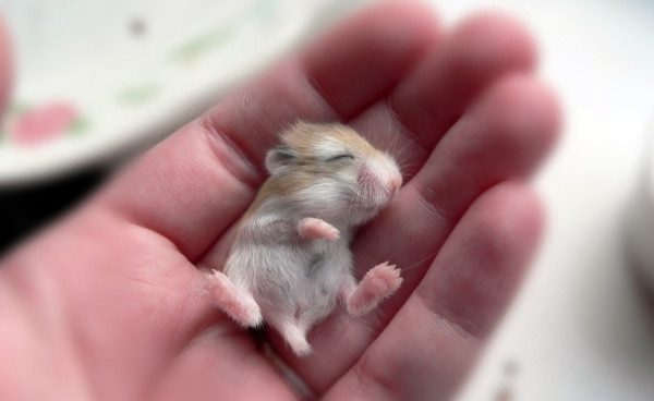 What Will I Look Like When I Grow Up >> 40 Adorable Pictures of Baby Animals just Born