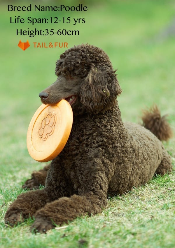 Breeds-of-Dogs-with-Floppy-Ears
