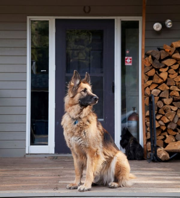 Train Your Dog To Be A Guard Dog