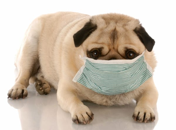 Most Common Dog Diseases