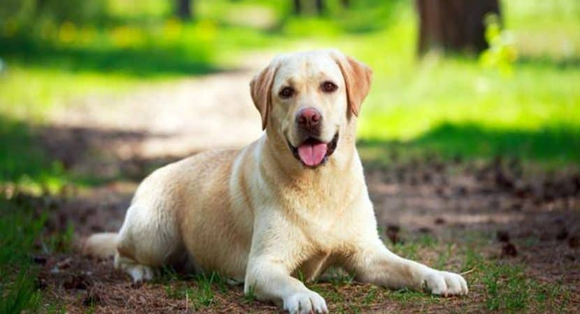 10 Most Intelligent Dog Breeds