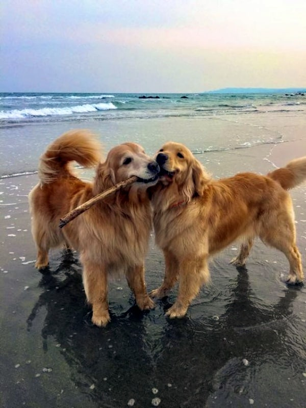 40 Pictures Of Dogs Enjoying Their Moments