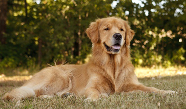 Most Intelligent Dog Breeds List