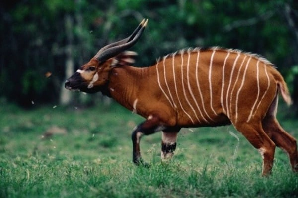 Rare Animals in the World