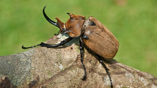 List of Biggest Insects In The World