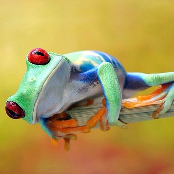 Amazing Frog: 40 Amazing Frog Pictures To Understand Them Better