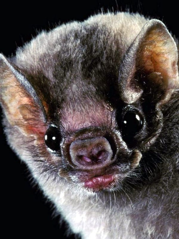 40 Bat Pictures Which Shows they aren't Vampires