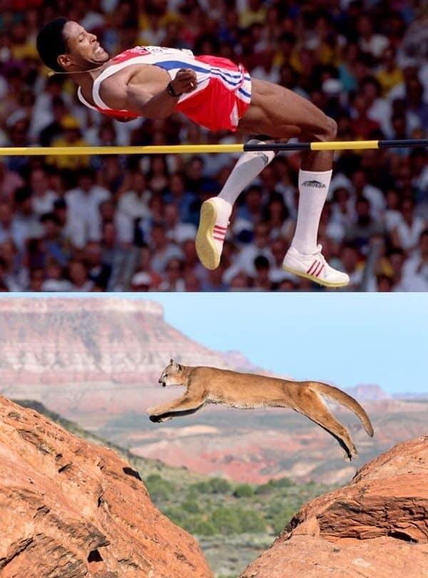 animal-vs.-olympians