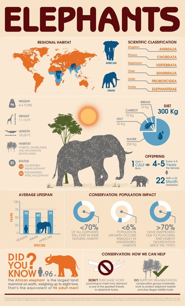 knowledgeful-animal-infographics