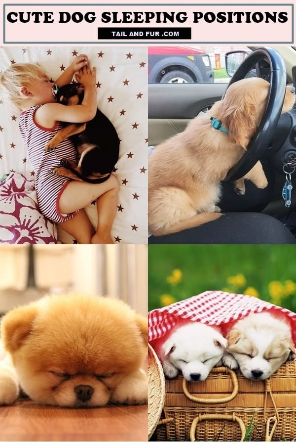 Cute-Dog-Sleeping-Positions