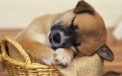 Cute-Dog-Sleeping-Positions