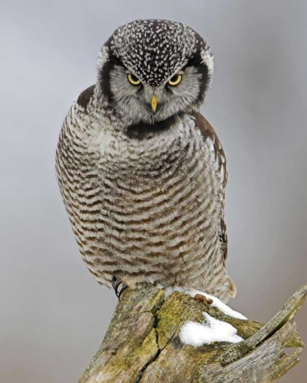 List-of-15-Wild-Mountain-Animals-with-Pictures