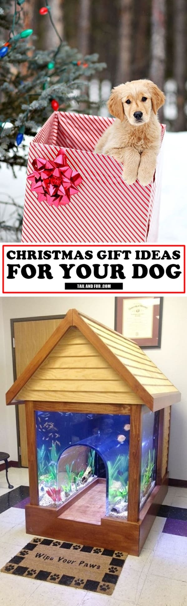 Christmas-Gift-Ideas-For-Your-Dog