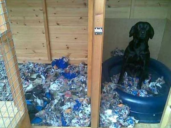 Dog can chew almost anything 35 pictures to justify for Dog resistant bedding