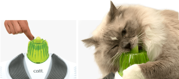 Ways-to-Keep-your-Cats-Teeth-Clean