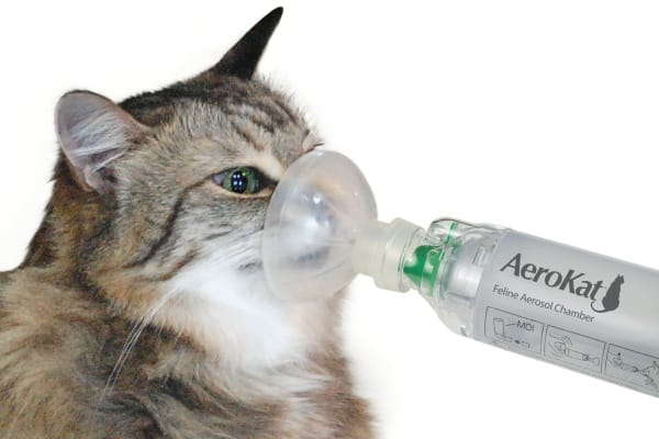 Causes-of-Sudden-Death-in-Cats