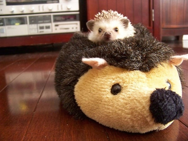 Cute-Pictures-of-Animals-With-Their-Own-Pets