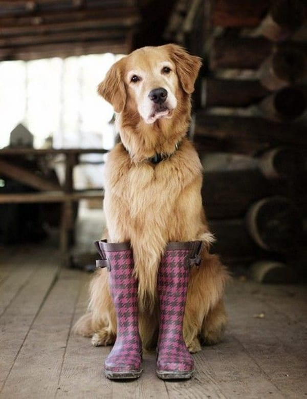 Cute-Pictures-of-Pets-Wearing-Shoes