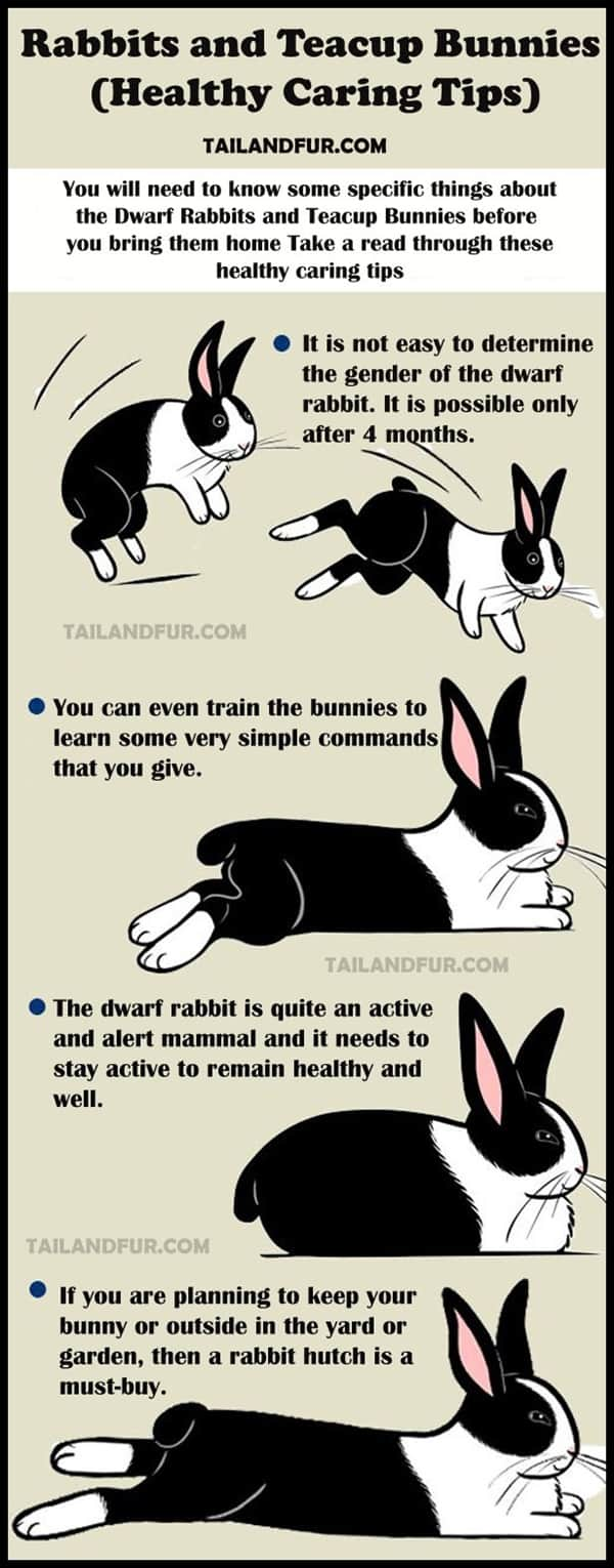 Dwarf-Rabbits-and-Teacup-Bunnies-Healthy-Caring-Tips.