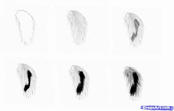 Easy-And-Practicable-Tail-And-Fur-Sketches