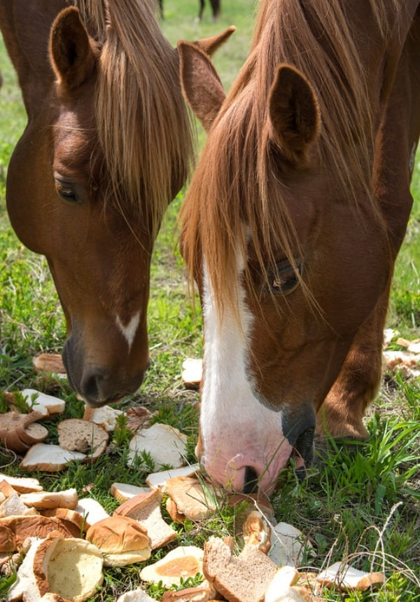 Foods-you-shouldnt-be-feeding-Your-Horse