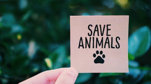 Heart-Touching-Slogan-on-Save-Animals