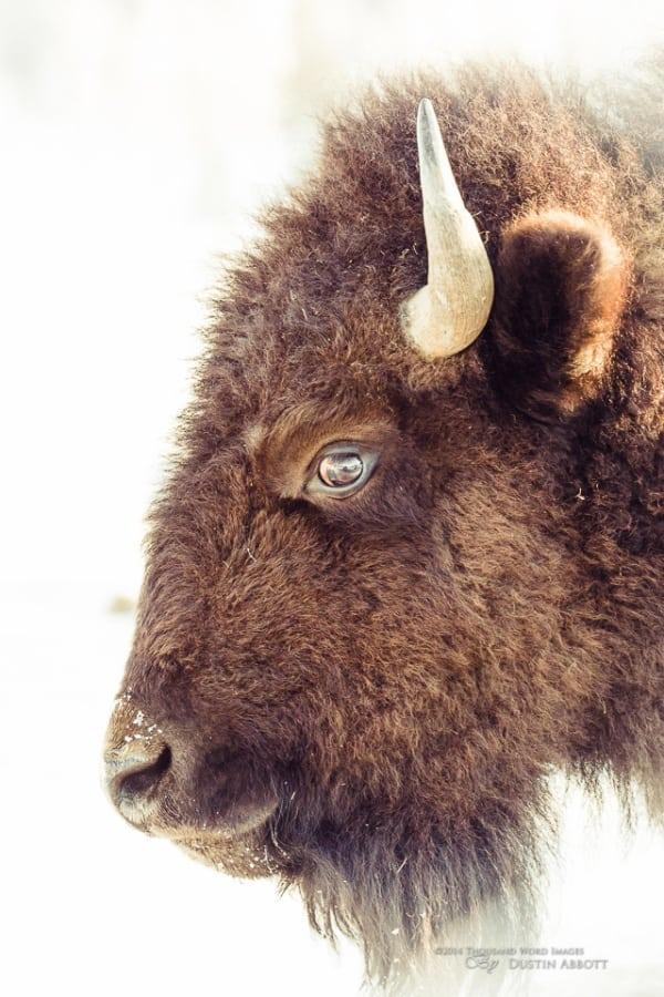 Warm-blooded Animals List