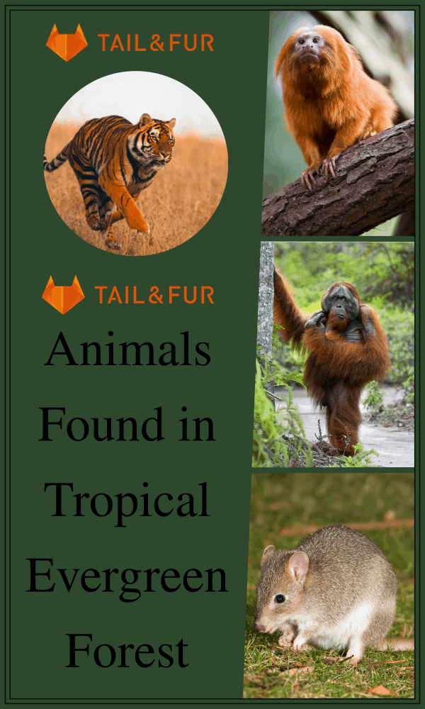 Animals Found in Tropical Evergreen Forest