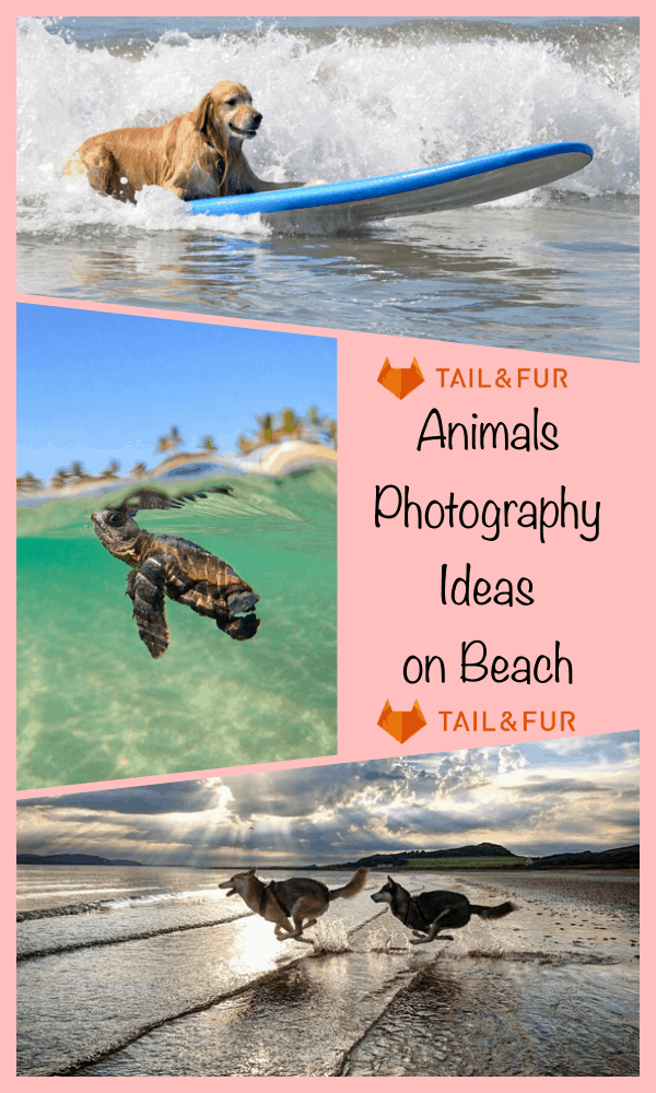 Animals Photography Ideas on Beach