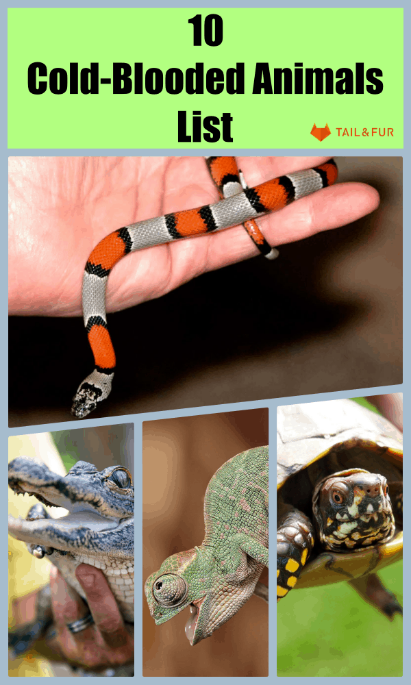 Cold-Blooded Animals List