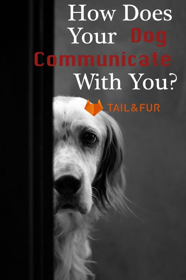 How Does Your Dog Communicate With You