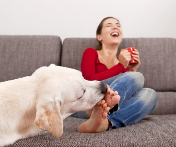 How Does Your Dog Communicate With You?