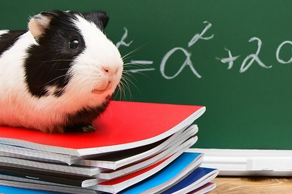 Benefits and Problems with Classroom Pets