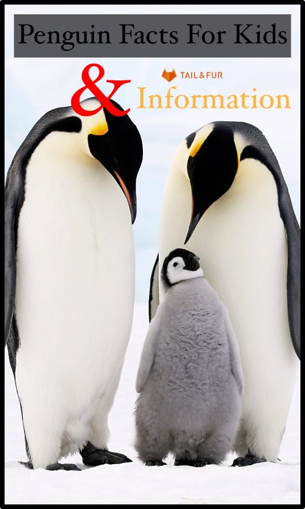 Penguin Facts for Kids and Diet Information