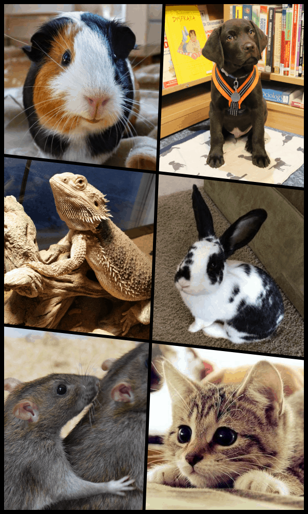 Practical Benefits and Problems with Classroom Pets