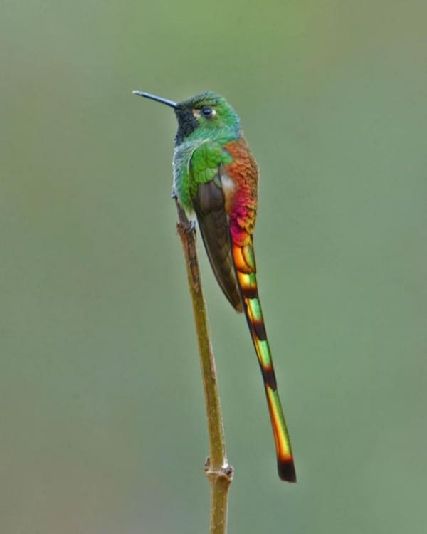 Types of Hummingbirds Pictures