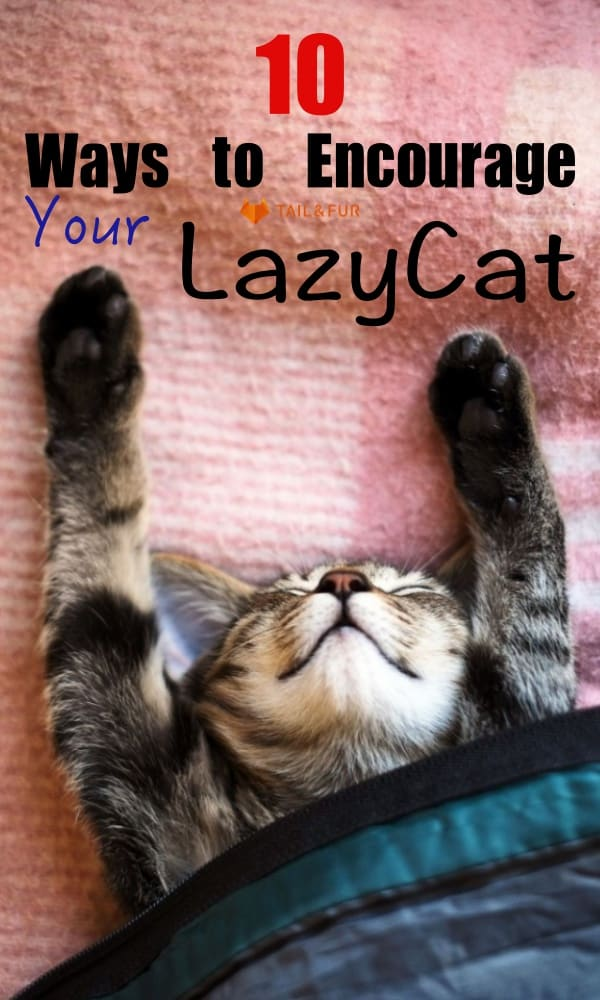 Ways to Encourage Your Cat to Stop Being a Lazy Meatball