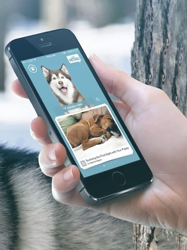 Apps To Download If You Have A Pet